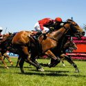 Can Australia Keep the Melbourne Cup at Home?